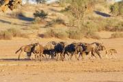 Namibie_Kalahari_03