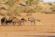 Namibie_Kalahari_04