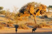 Namibie_Kalahari_05