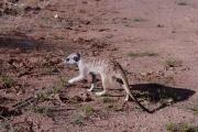Namibie_Kalahari_07