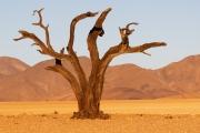 Namibie_Kanaan_10