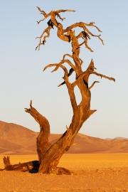 Namibie_Kanaan_22