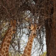 Namibie_Damaraland_09