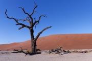 Namibie_Deadvlei_24