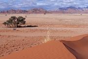 Namibie_Elim-Dune_01