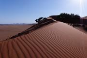 Namibie_Elim-Dune_03
