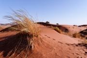Namibie_Elim-Dune_04
