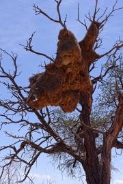 Namibie-Nabib-Naukluft-Park_03