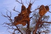 Namibie-Nabib-Naukluft-Park_04