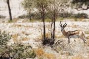 Namibie-Nabib-Naukluft-Park_10