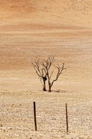 Namibie-Nabib-Naukluft-Park_13